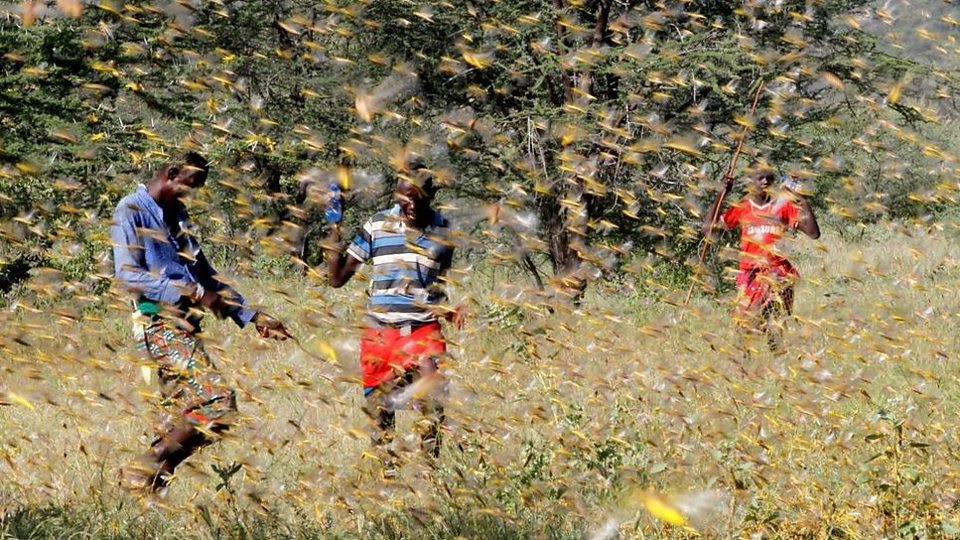 How East Africa is battling devastating locust swarms