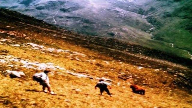 Bull on Five Sisters of Kintail Ridge