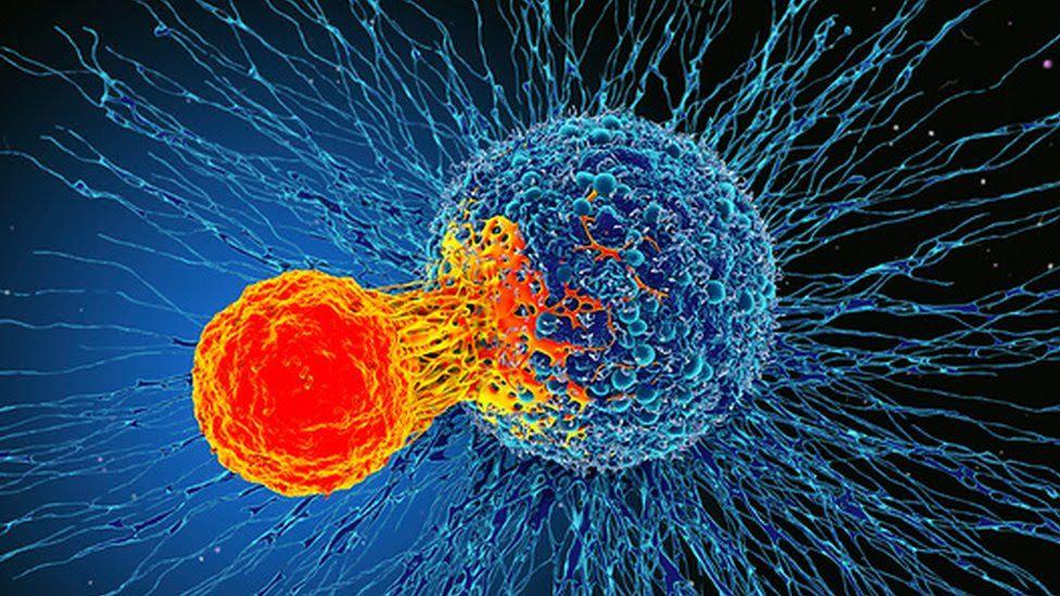 T-cells atacam células cancerosas