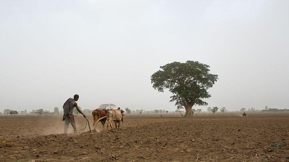 Man ploughing field in Ethiopia