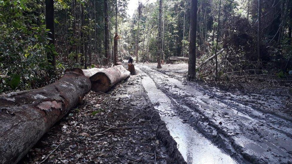 Força-tarefa no Pará combate focos de desmatamento em Altamira, Anapu, Moju, Tailândia e Senador José Porfírio.